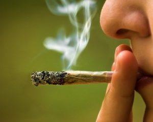 No Daubert Expert Witness Needed to Identify Marijuana, Rules Florida Court
